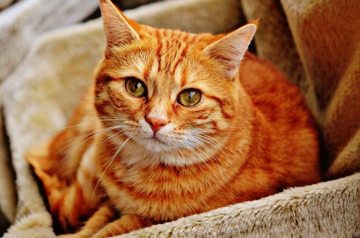 Arbre à chat : utile pour les chats timides