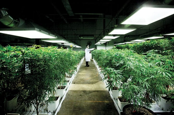 Une société américaine change d'investissement pour s'assurer dans l'industrie du cannabis