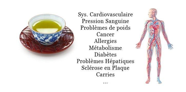 Le thé vert et ses nombreux bienfaits pour votre santé